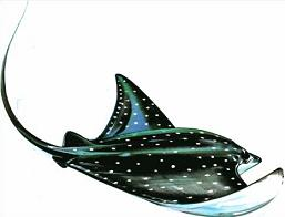 Free Stingray Clipart