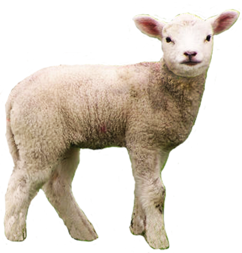 Lamb Transparent Png Clipart Animal Clip Art
