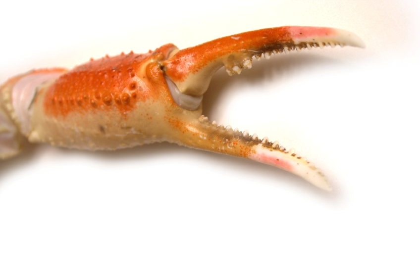 Crab Claw Kzxip4 Clipart Kid