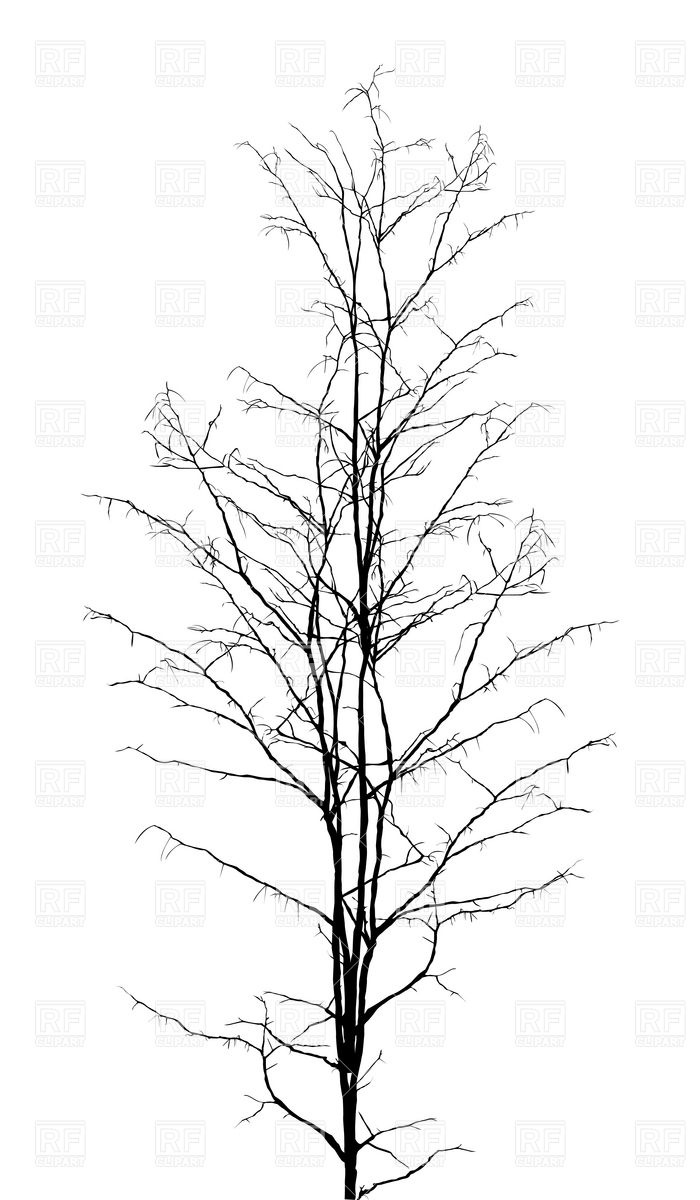 Leafless Dry Tree Silhouette 6722 Download Royalty Free Vector