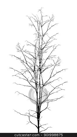 Leafless Tree Stock Vector Clipart Leafless Dry Tree Silhouette On