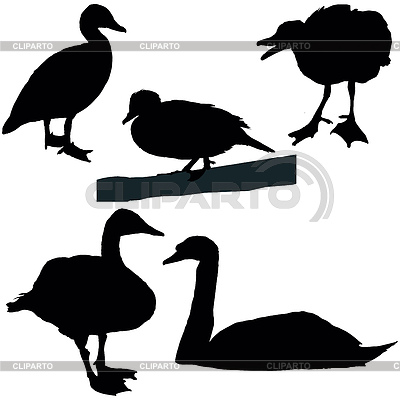 Ducks And Swans Set Of A Black Vector Silhouettes     Belyaev