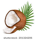 Coconut And Slice Of Coconut With Leaves  Vector Illustration