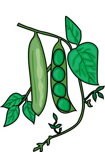 Vegetable Clipart   10 Peas   Classroom Clipart