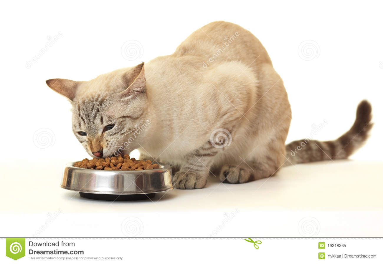Cat Eating Clipart Cat Eat Dry Food