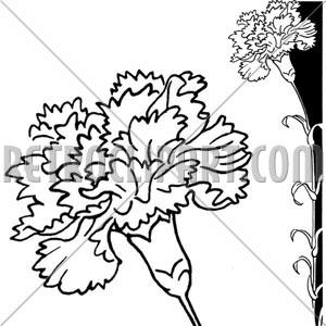 Clip Art Borders Carnation #jTE4E4 - Clipart Kid