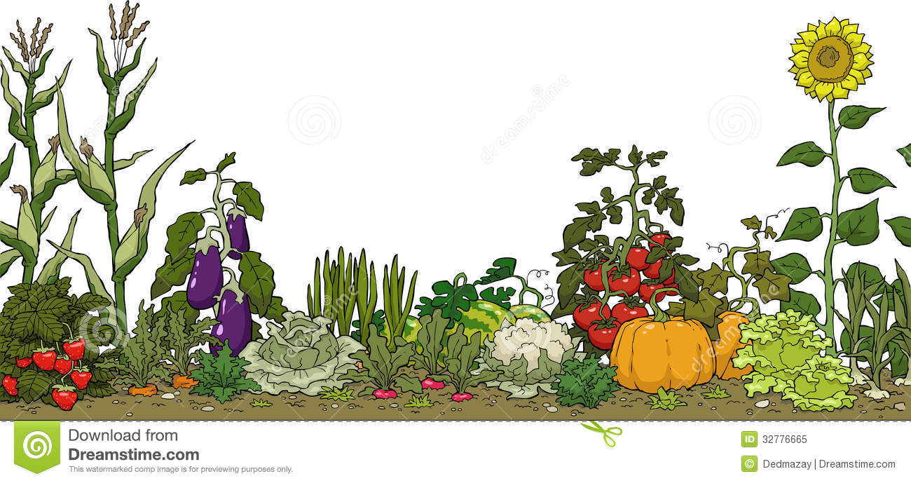 Vegetable Garden Bed Royalty Free Stock Photo   Image  32776665