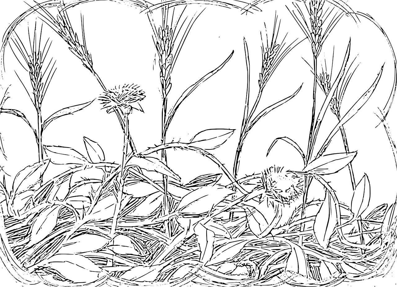the rich fool coloring page - other seed fell among thorns and the thorns grew up and