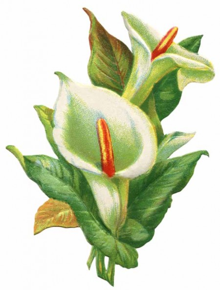 Vintage Easter Lily Clip Art   Click For Printable Larger Image