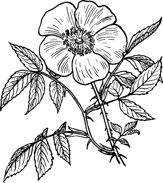 Black Outline Drawing Plants Flower White Flowers   Public