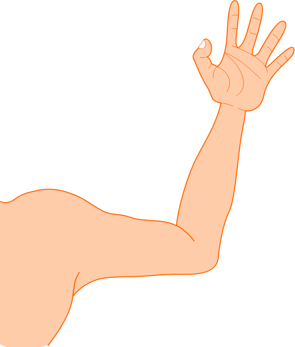 Arm Right Arm Clipart   Cliparthut   Free Clipart