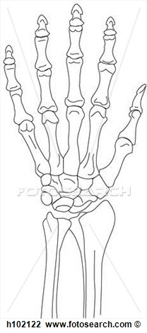 Clip Art   Wrist   Hand Skeleton Dorsal  Fotosearch   Search Clipart