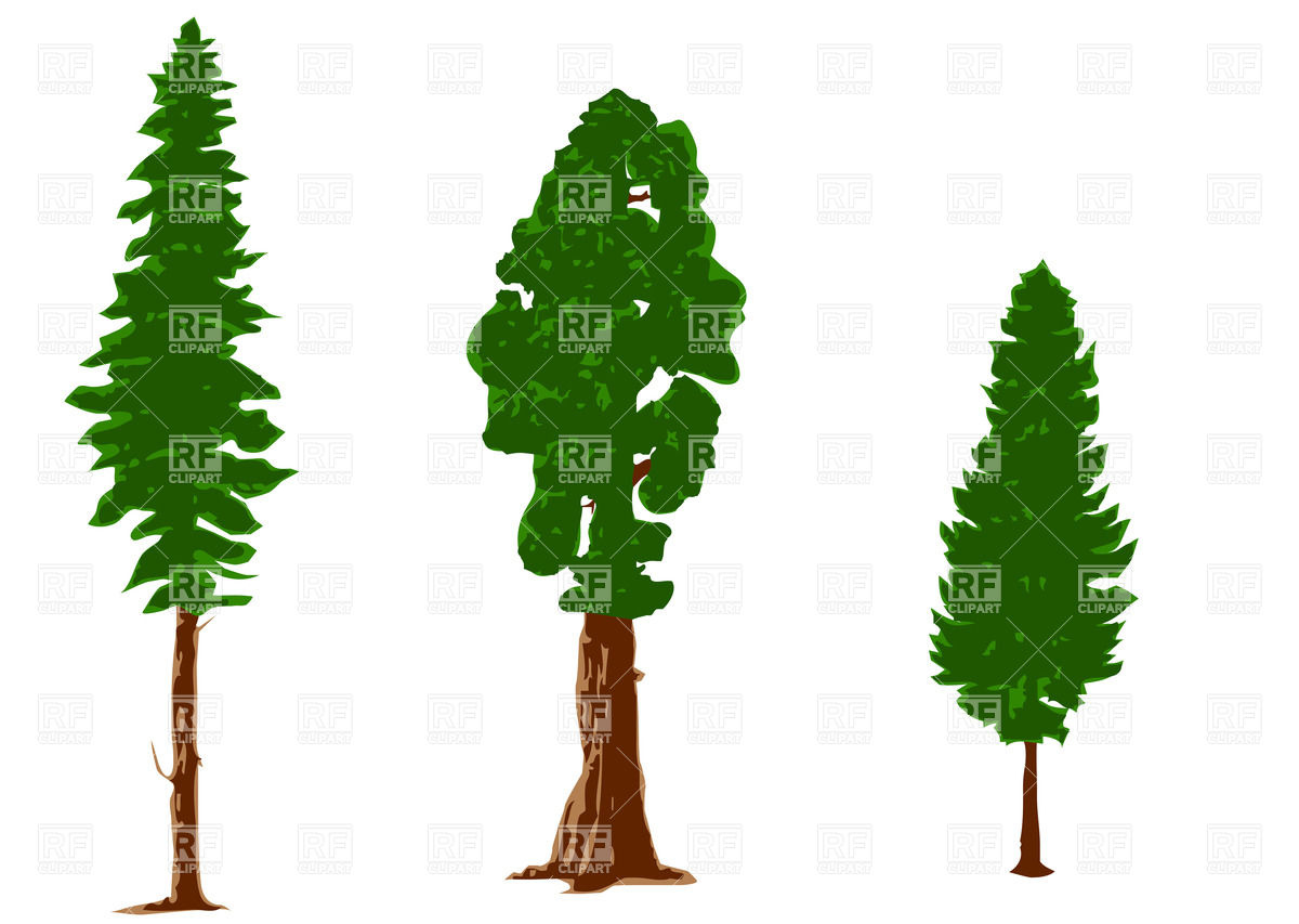 Pine Tree Outline Clipart Pine Tree Branch Clipart Pine Tree Clipart