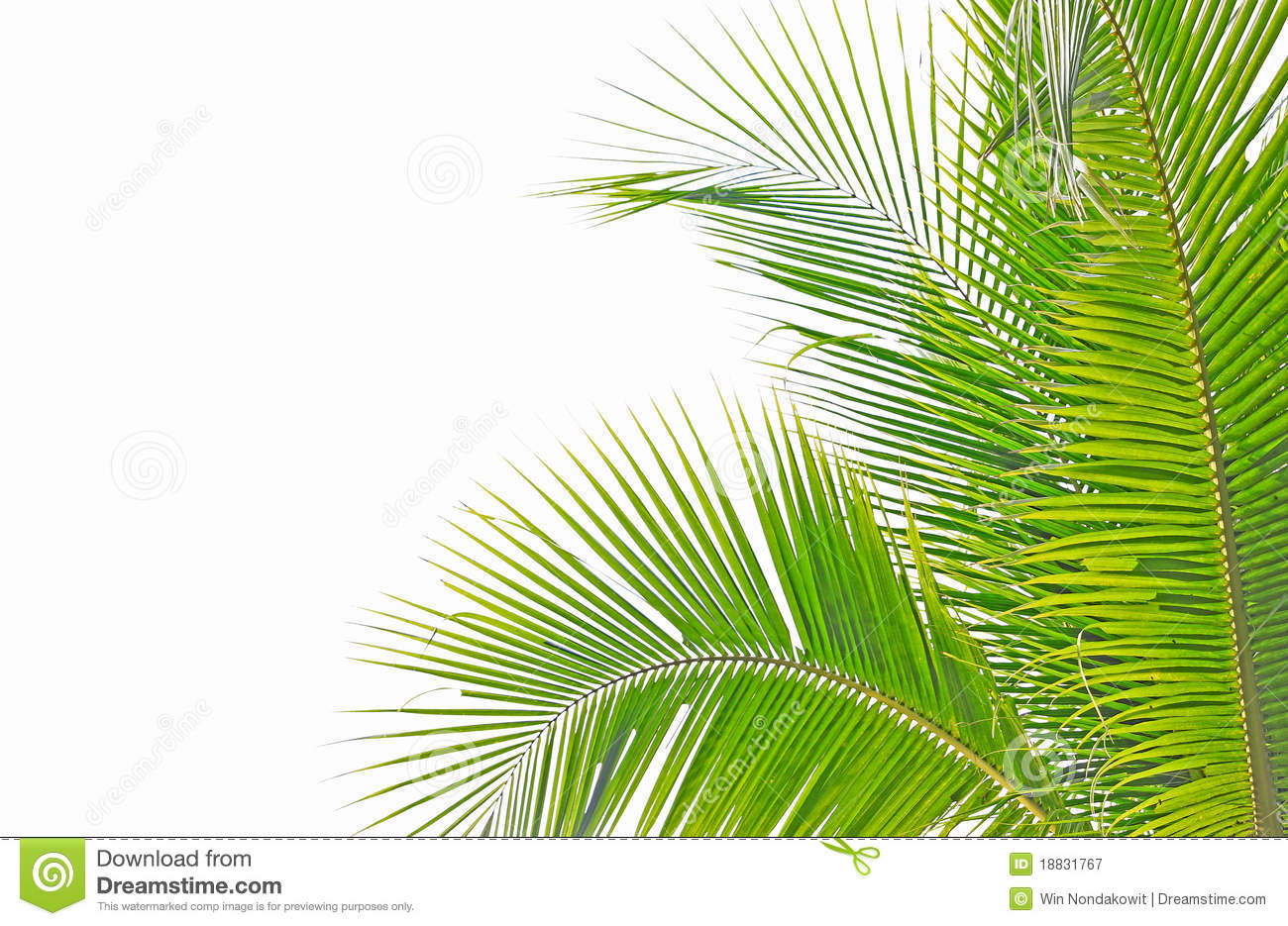 Palm Sunday Leaf Clipart  Clipart Kid