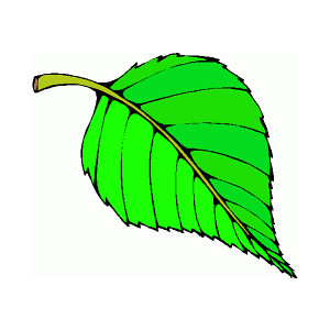Animated Tree Leaves   Clipart Best