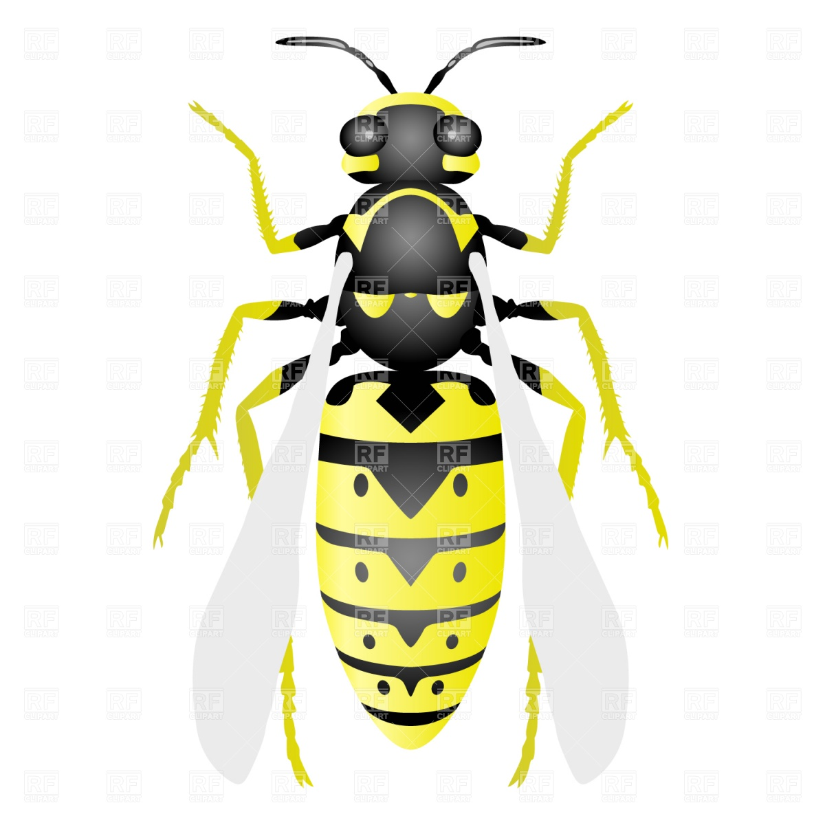 Wasp Plants And Animals Download Royalty Free Vector Clip Art  Eps