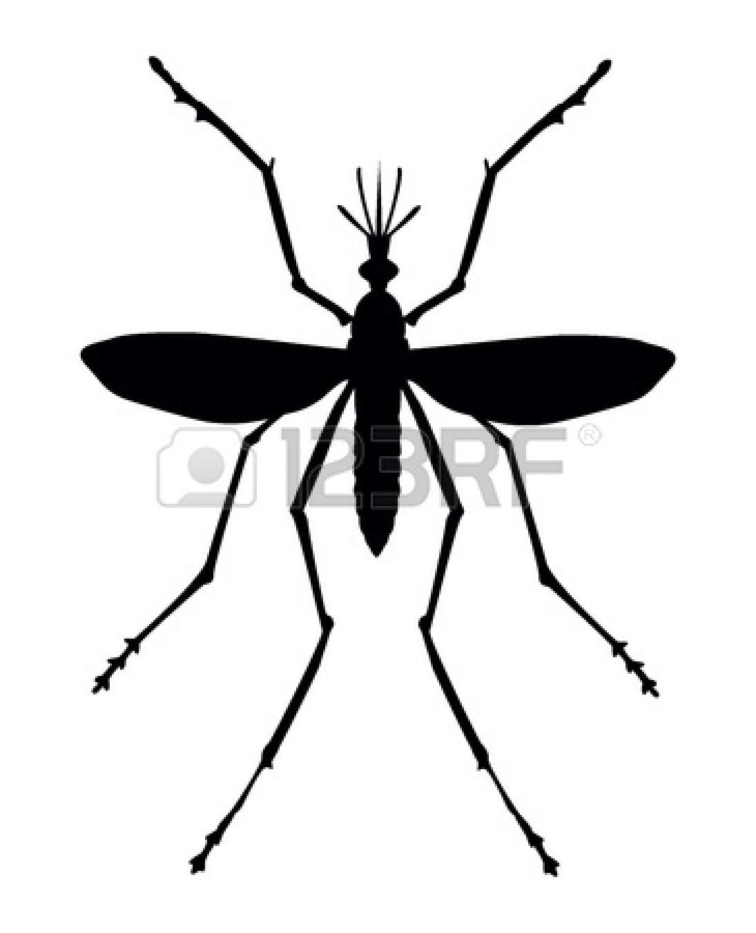 Stunning Cliparts Clipart Mosquito Da Dengue Desenho 26