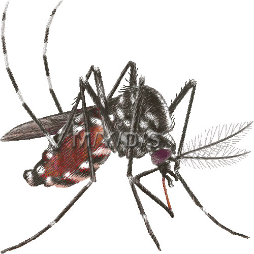 Tiger Mosquito Forest Day Mosquito Clipart Graphics  Free Clip Art