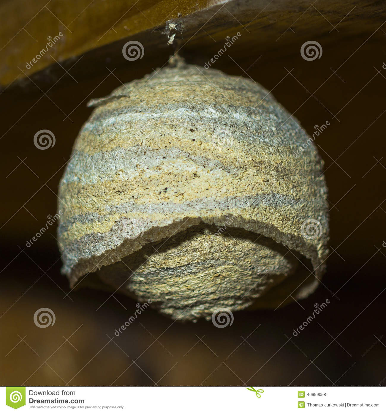Wasp Nest Stock Photo   Image  40999058