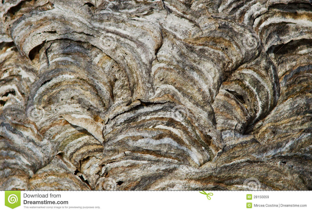 Wasp Nest Texture Royalty Free Stock Images   Image  28150059