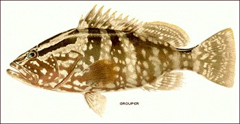 Free Grouper Clipart   Free Clipart Graphics Images And Photos