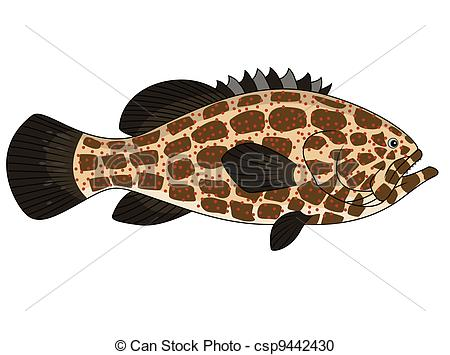 Vector Clipart Of Grouper Fish   Vector Illustration Of Grouper Fish