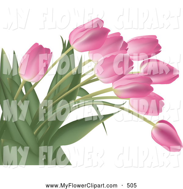 Clip Art Of A Bright Bunch Of Pink Tulip Flowers With Lush Green