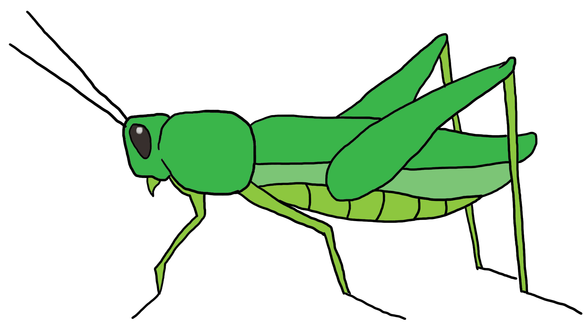 How To Draw A Grasshopper  5 Steps  With Pictures    Wikihow