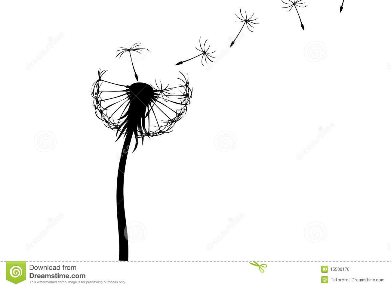 Dandelion Royalty Free Stock Image   Image  15500176
