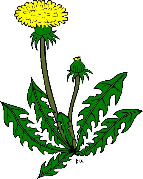 Clip Art Dandelion Clipart dandelion clipart kid flower clip art at clker com vector online
