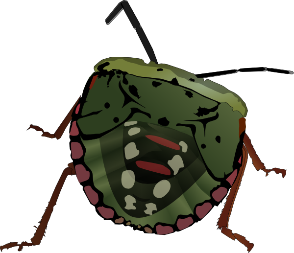 Stink Bug Clip Art At Clker Com   Vector Clip Art Online Royalty Free
