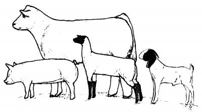 4 H Livestock Of Clipart Clipart Suggest