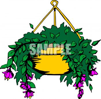 Flowering House Plant In A Hanging Planter   Royalty Free Clip Art