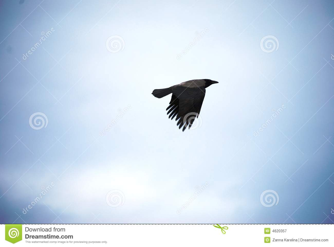 Raven In The Sky Royalty Free Stock Photography   Image  4620357