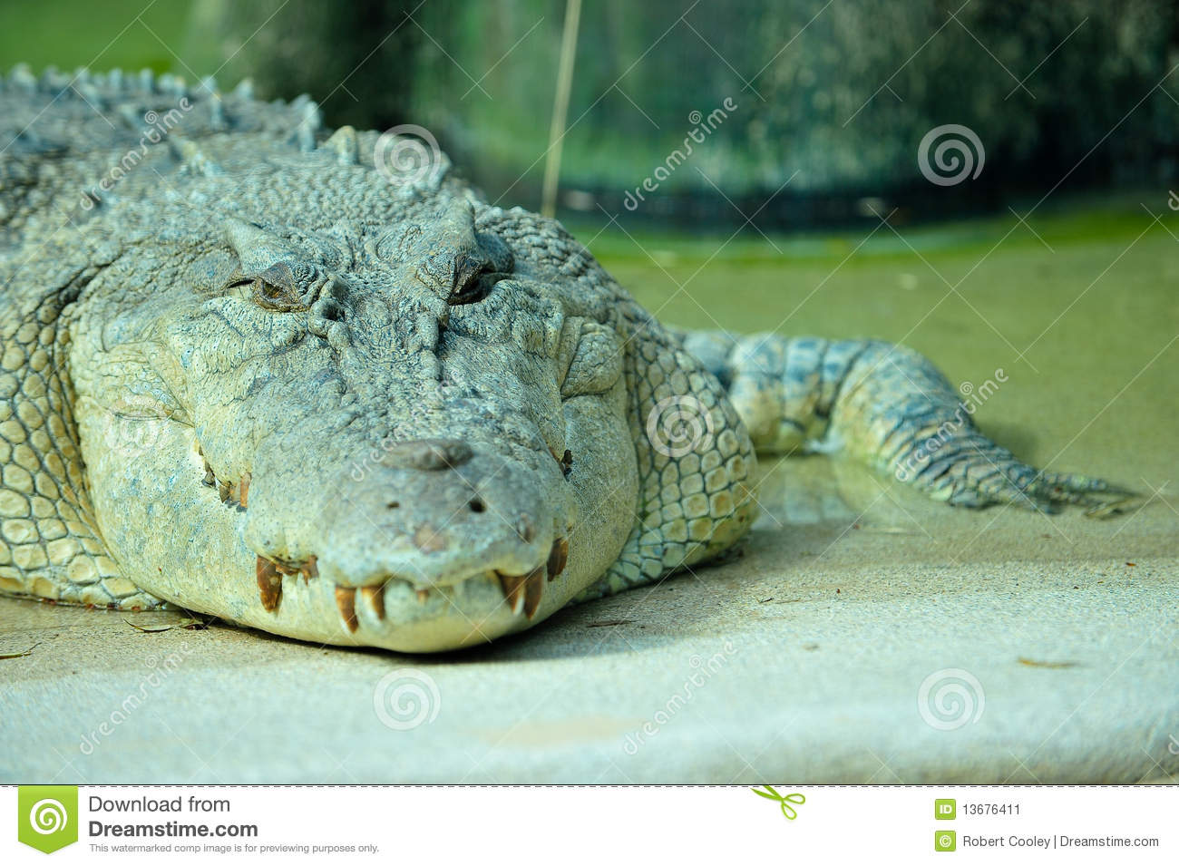scary crocodile clipart clipart suggest