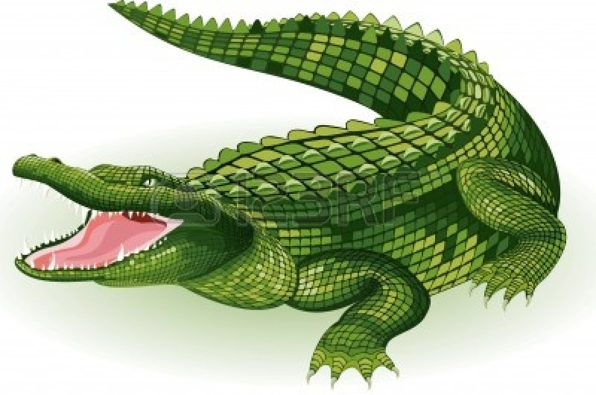 Vector Illustration Of A Crocodile On White Background   Free Images