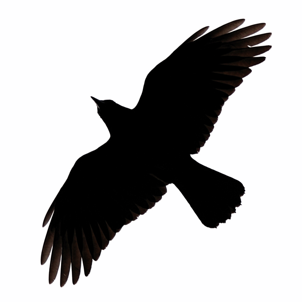 Crow Silhouette   Clipart Best
