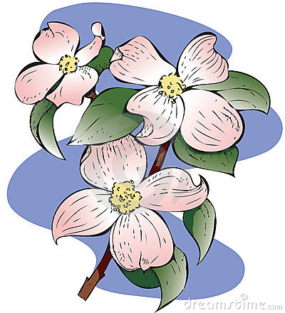 Dogwood Branch Clip Art Red Flowering Dogwood 13891177 Jpg