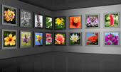 Flower Photography Gallery Exhibition Hall Concept   Clipart Graphic