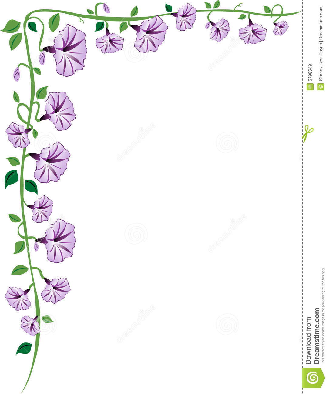 Morning Glory Vine Border Purple Royalty Free Stock Photos   Image