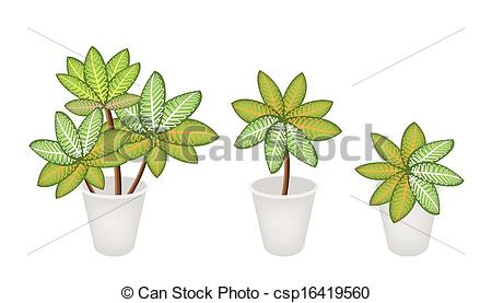 Clip Art Vector Of Dieffenbachia Picta Marianne Plants In Three Flower