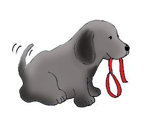 Cute Dog With Dog Leash