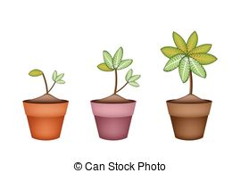 Dieffenbachia Picta Marianne Plant In Ceramic Pot Clip Art