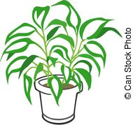 Houseplant   Vector Illustration Of A Dieffenbachia Potted