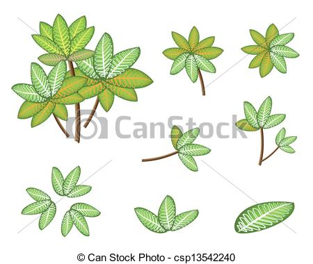Vector   A Set Of Isometric Dieffenbachia Picta Marianne Plant   Stock