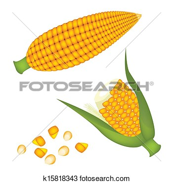Corn Kernel Clipart Two Ears Of Corn With Kernel