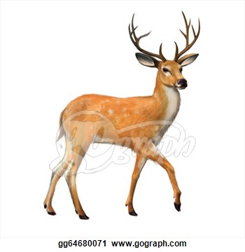 Big Buck Free Cliparts All Used For Free