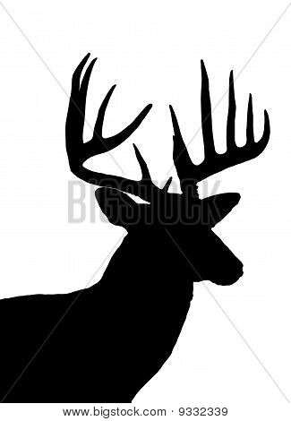 Whitetail Deer Head Silhouette Isolated On White Stock Photo   Stock