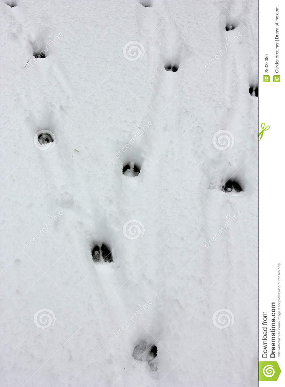 Deer Tracks Royalty Free Stock Photo   Image  28322385