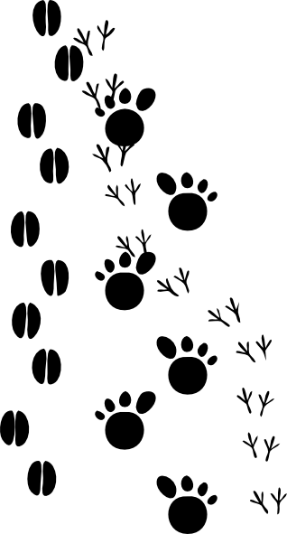 Go Back   Gallery For   Deer Tracks Clipart